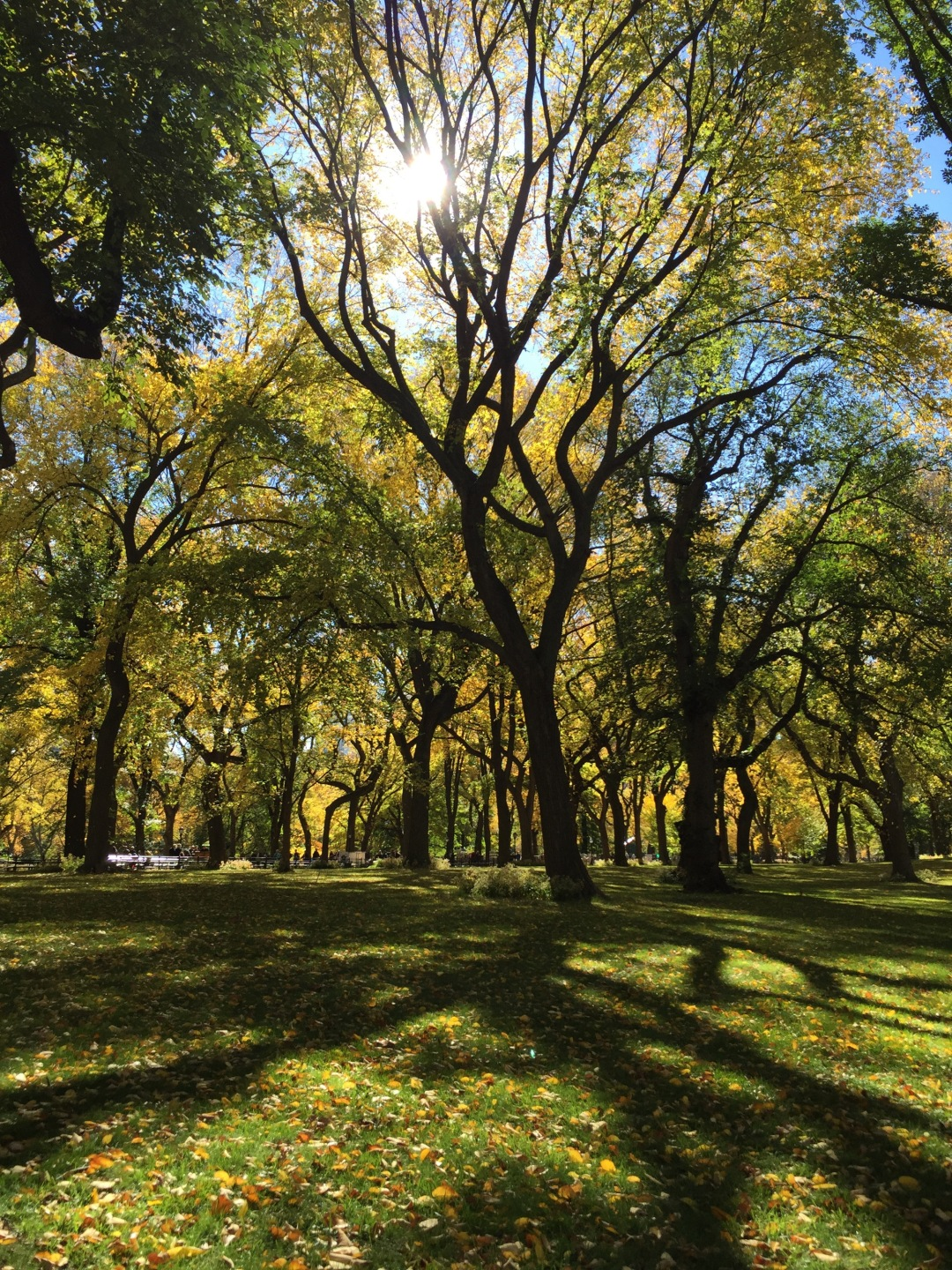 beautiful Central Park in the fall