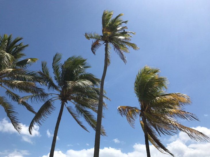 palm trees on the beach in Miami